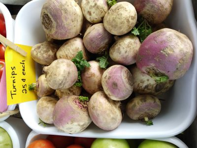Turnip Roots (Brassica rapa)