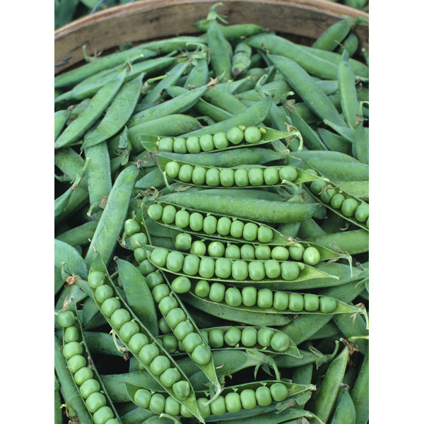 Peas, Green Arrow