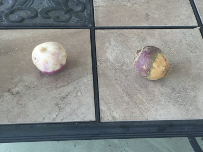 What veggies are these?